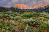 California  Sierra Nevada Mountains Wildflowers Bloom in Valley