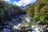 A Small Stream Near Milford Sound on the South Island of New Zealand