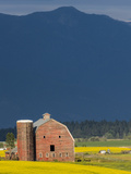 Red Barn with a Blooming Field of Canola in the Flathead Valley  Montana  Usa