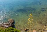 Cliffs of Talamone  Grosseto Province  Maremma  Tuscany  Italy