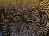 Spider Web  Florida