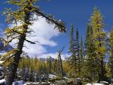 Opabin Plateau Landscape  Yoho National Park  British Columbia  Canada