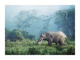 African elephant  Ngorongoro Crater  Tanzania