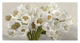 Tulipes blanches