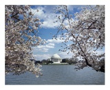 Jefferson Memorial with cherry blossoms  Washington  DC - Vintage Style Photo Tint Variant