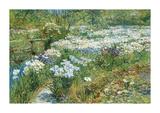 The Water Garden  1909