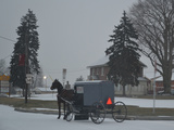 Amish Horse and Buggy  2013