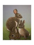 Rabbit Family  2016
