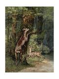 Deer  1868