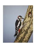 Red Headed Woodpecker  2016