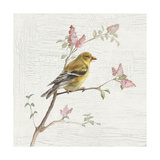 Female Goldfinch Vintage
