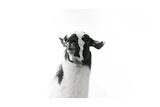 Lovable Llama I