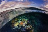 Opal Reef Off the Great Barrier Reef