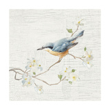 Nuthatch Vintage
