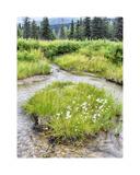 Alaska marshland