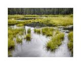 Hatcher's Pass creek marsh