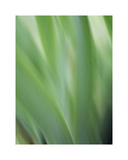 Green flora motion