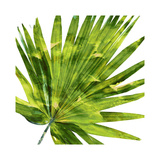 Tropical Palm IV