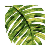 Tropical Palm II