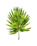 Palm IV