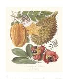 Star Fruit & Akee