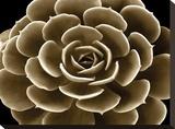 Succulent Taupe IV