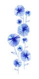 Flowering Aster