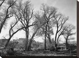 At Taos Pueblo National Historic Landmark  New Mexico  ca 1941-1942