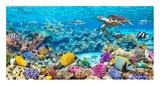 Sea Turtle and fish, Maldivian Coral Reef Giclée par Pangea Images