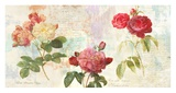 Redoute's Roses 20