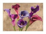 Multi-colored Callas