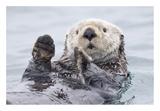 Yesterday I Caught A Fish Thiiis Big! Otter. Alaska Giclée par Roman Golubenko