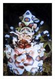 Harlequin Shrimp Giclée par Barathieu Gabriel