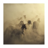 Migration Of Horses