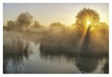 Wisps Of Mist And Sunlight
