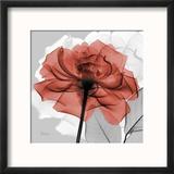 Rose on Gray 1 Reproduction encadrée par Albert Koetsier