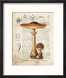 Mushroom I Reproduction encadrée par Babbitt Gwendolyn