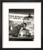 Child, Cat and Dove Reproduction encadrée par Robert Doisneau