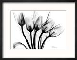 Early Tulips N Black and White Reproduction encadrée par Albert Koetsier