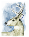 Wandering Stag I