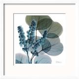 Lilly Of Eucalyptus Reproduction encadrée par Albert Koetsier