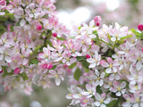 Dancing Blossoms