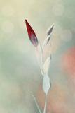 Alone in the Light Tableau sur toile par Philippe Sainte-Laudy