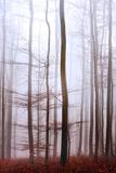 Reciprocation Tableau sur toile par Philippe Sainte-Laudy