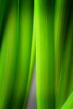 Green Leaf Curtains Tableau sur toile par Philippe Sainte-Laudy