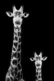 Safari Profile Collection - Giraffe and Baby Black Edition II Tableau sur toile par Philippe Hugonnard