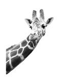 Girafe Tableau sur toile