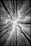 Circulatory System of the Forest Tableau sur toile par Alexandr Popovsky