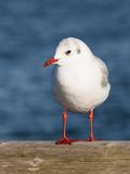 Seegull Gull Bird