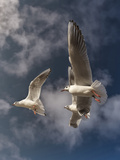 Seegull Gull Bird 3